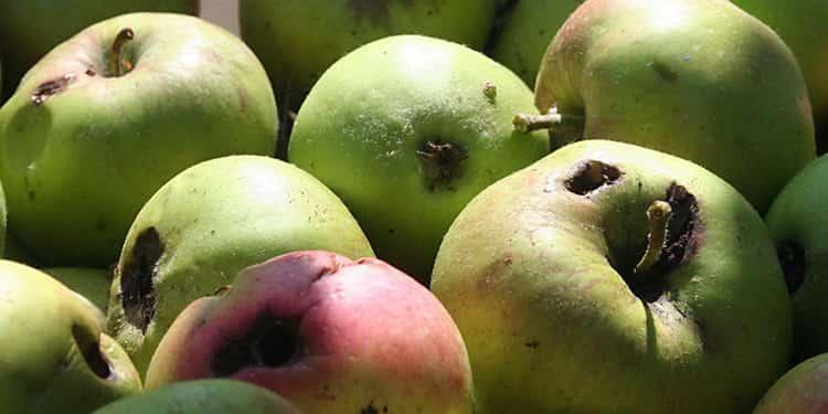 к чему снятся яблоки во сне женщине