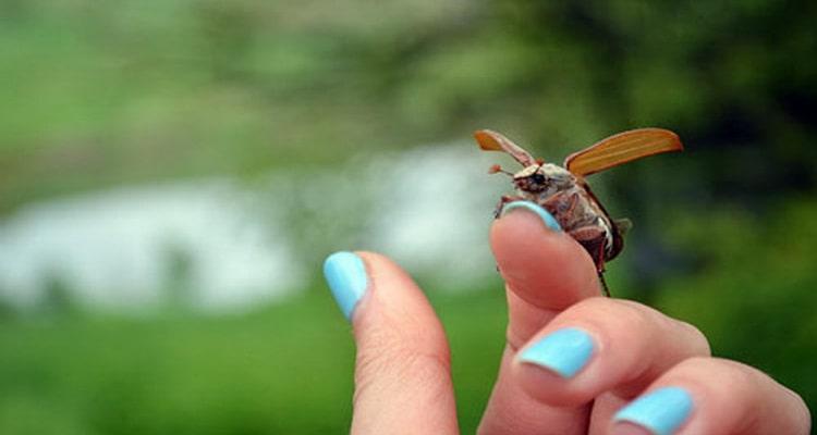 к чему снятся во сне женщине жуки