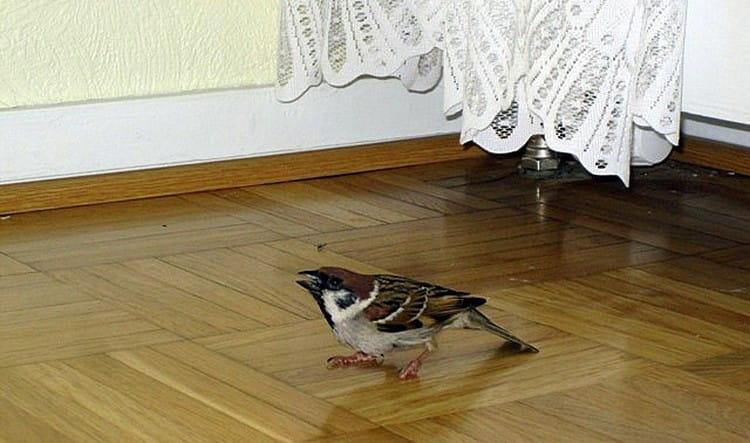 Рассмотрим, что значит примета, если птица залетела в дом.