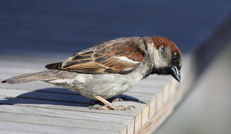 Узнайте, что значит примета, если птица залетела в окно.