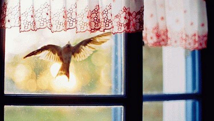 Народную примету, когда птица залетела в окно, нередко связывают с плохими событиями в будущем.