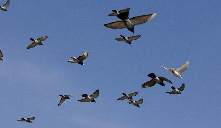 Узнайте, что значит примета, когда птица влетела в дом.