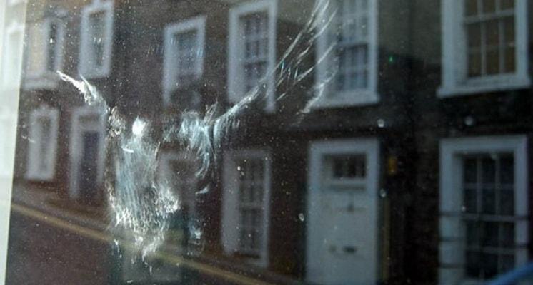 птица в окно врезалась примета