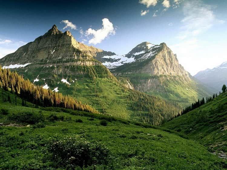 сонник снежная гора