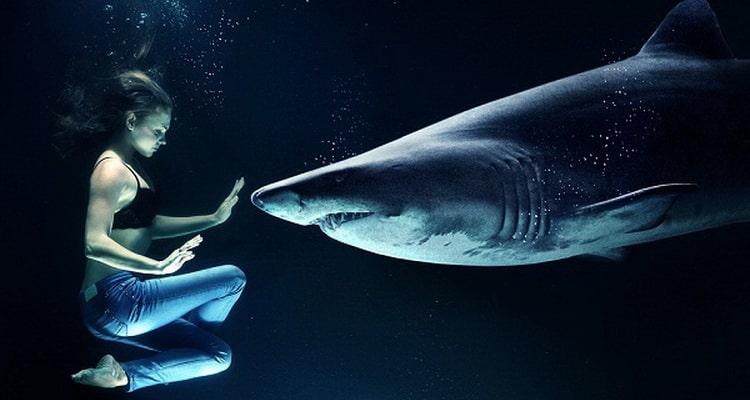 приснилась нападающая акула
