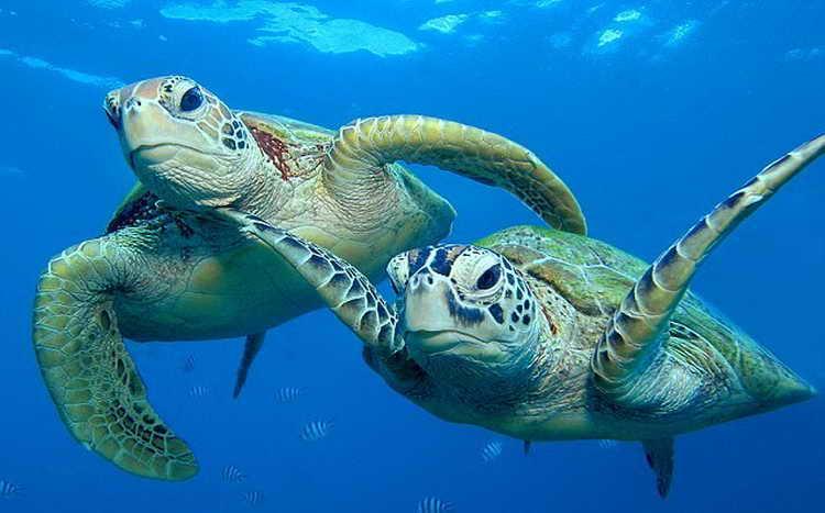 к чему снятся черепахи маленькие