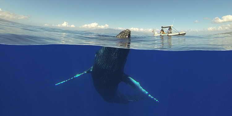 сонник кит в воде