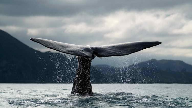 кит во сне для женщины