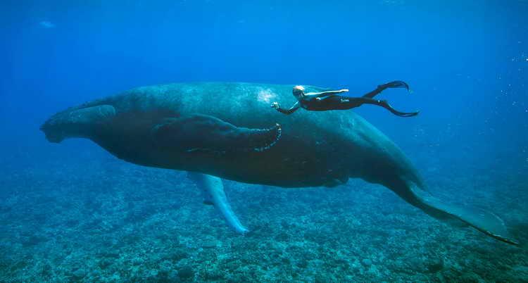 приснился кит в море