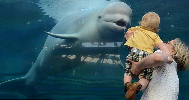 приснился кит
