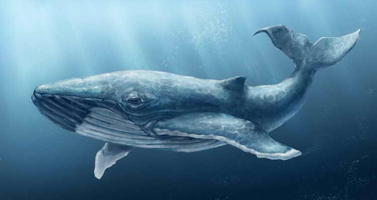 к чему снится кит в море