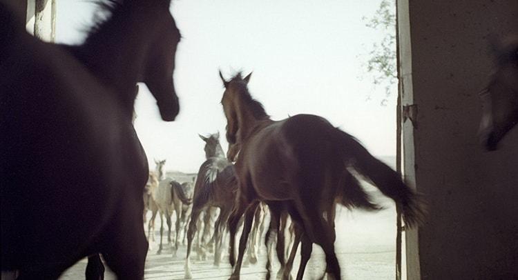 к чему снится конь женщине