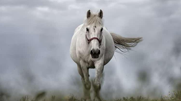 конь во сне к чему снится