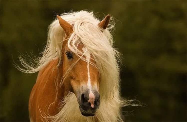 к чему снится черный конь женщине