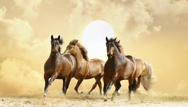 к чему снится черный конь
