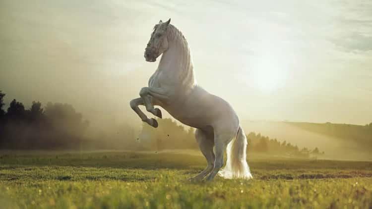 К чему снится белый конь