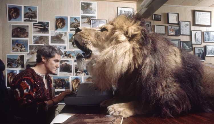 к чему снятся львы женщине