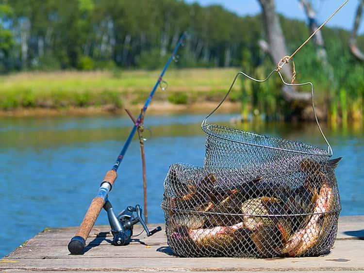 к чему снятся рыбалка и рыба