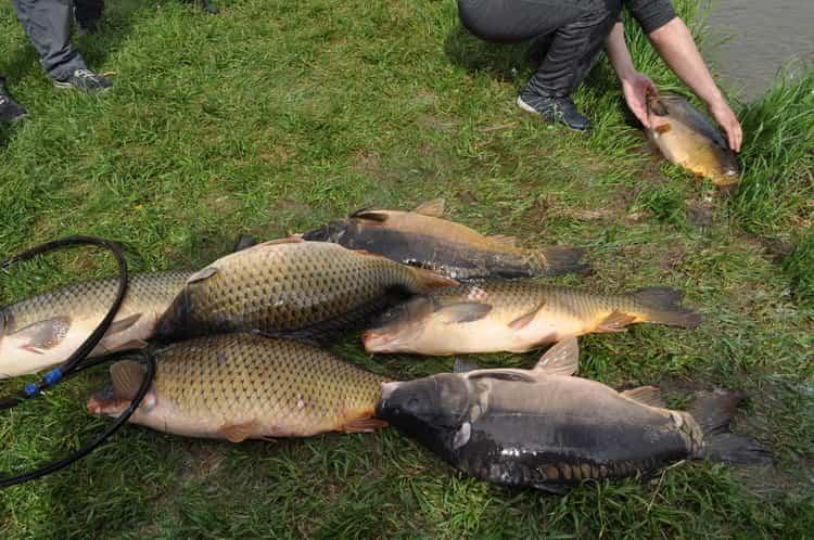 К чему снится рыбалка: сонник