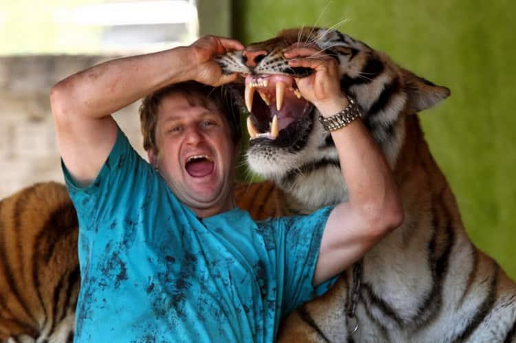 к чему снятся тигры и львы женщине