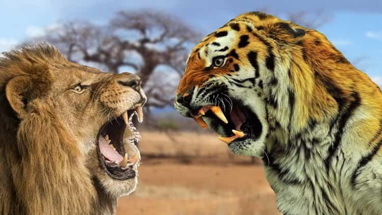 к чему снится тигр во сне