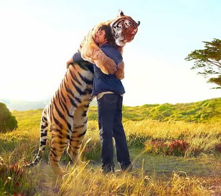 сонник тигр во сне женщине
