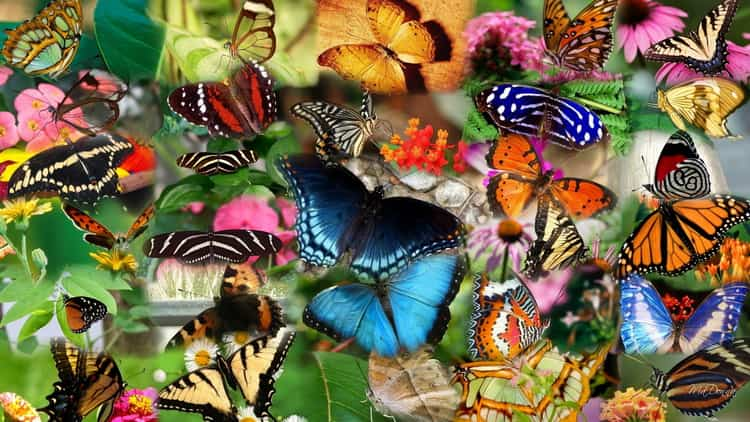 К чему снятся бабочки: сонник