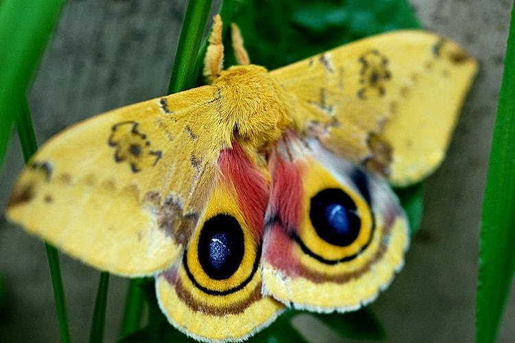 к чему снятся бабочки цветные много
