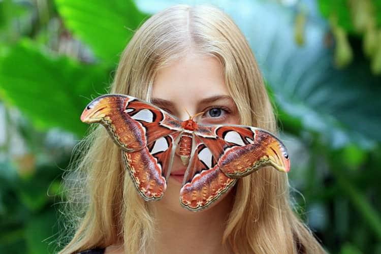 к чему снятся бабочки цветные