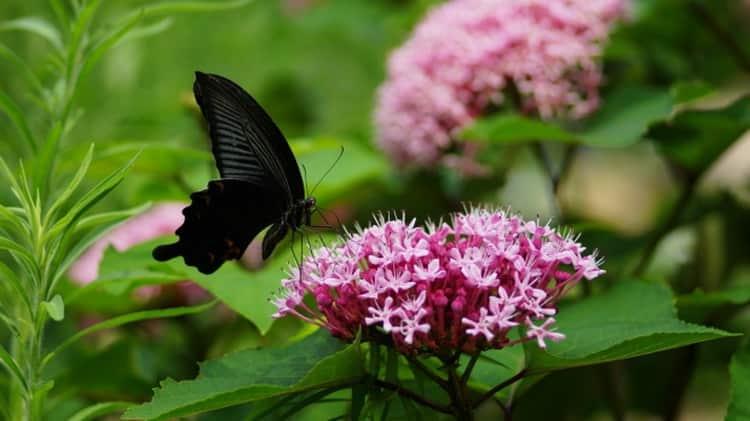 к чему снится бабочка большая красивая