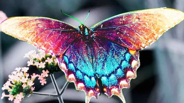 приснилась бабочка