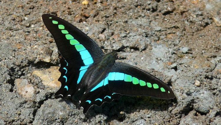 к чему снятся бабочки много
