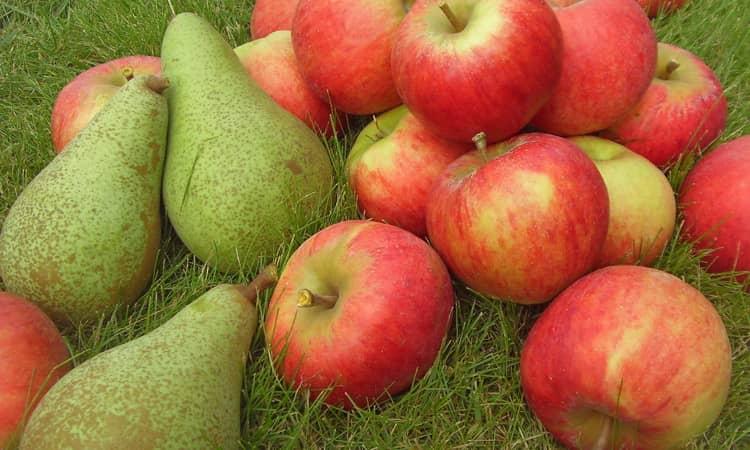 к чему снятся яблоки и груши