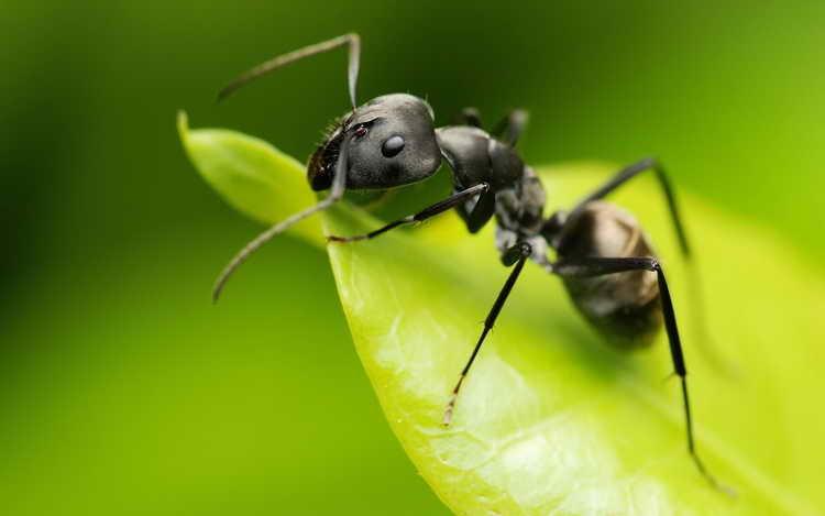 сонник муравьи к чему снятся