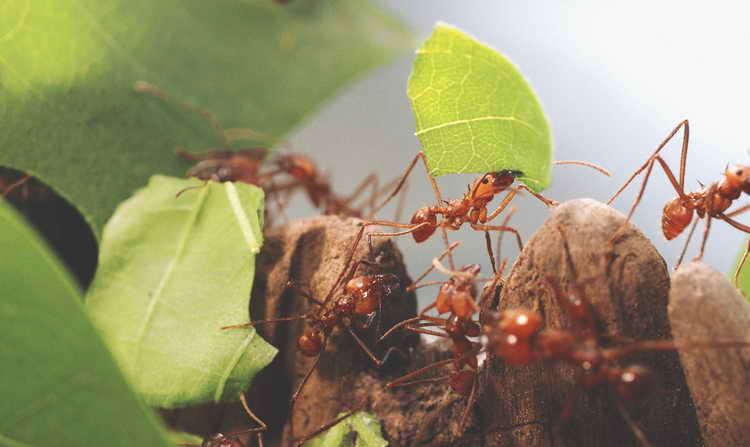 к чему снятся муравьи во сне женщине