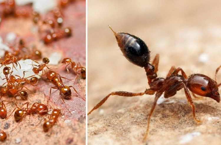 к чему снятся муравьи в большом количестве