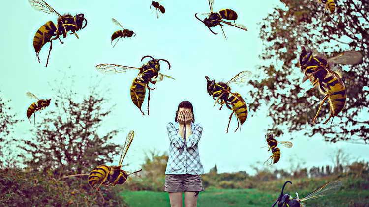 сонник насекомые много