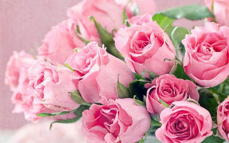 К чему снятся розы: сонник