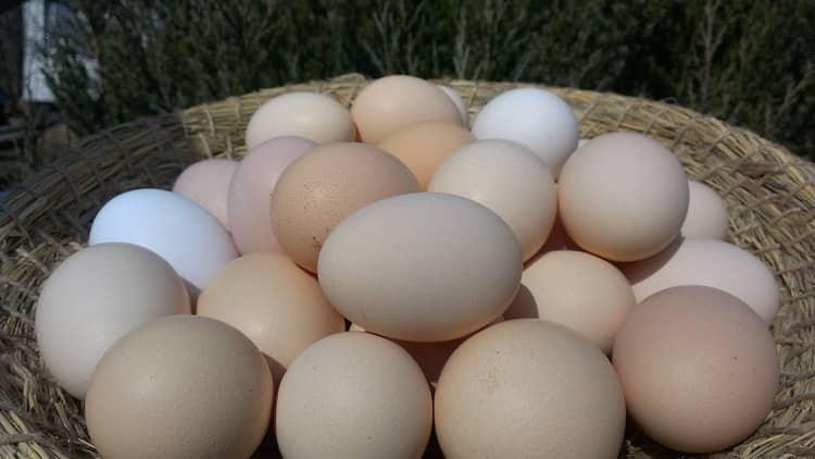 К чему снятся яйца куриные: сонник