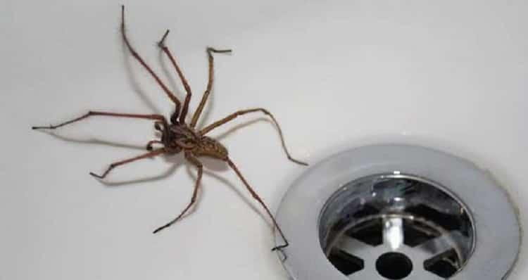 паук примета