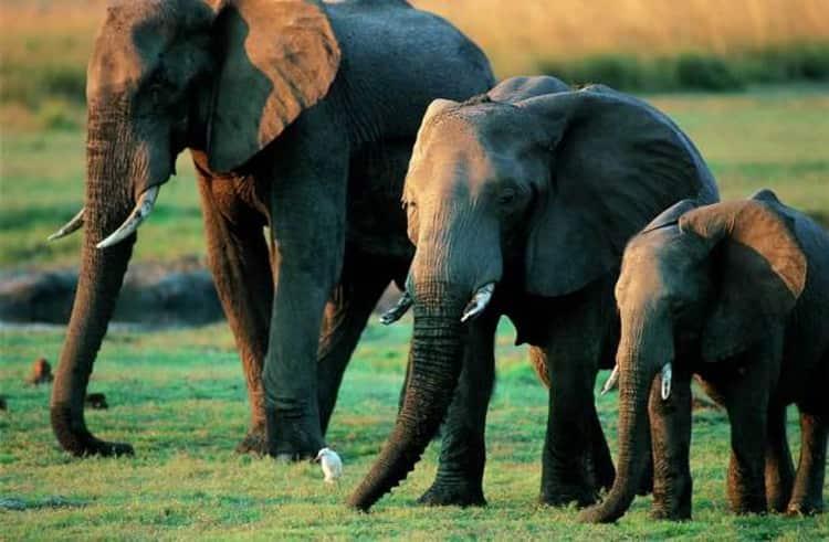 приснился слон к чему это