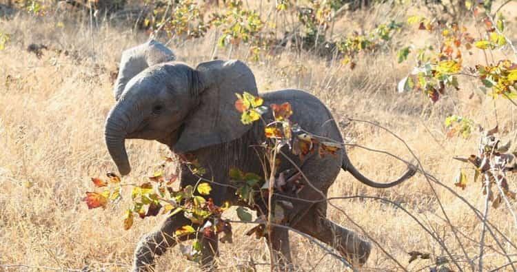 к чему снится слон во сне