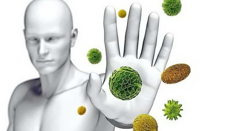 Айва: свойства, польза и вред для здоровья
