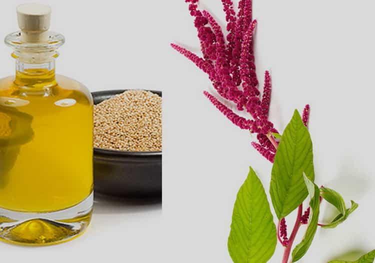 Амарантовое масло: свойства