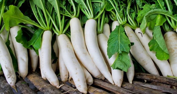 Как выбрать овощ дайкон