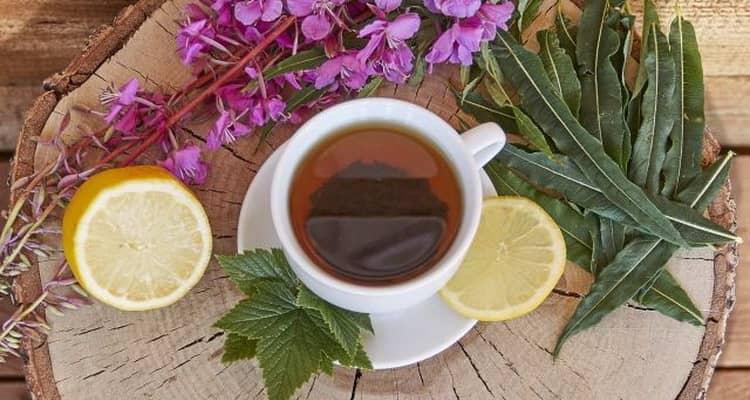 Отзывы об иван-чае