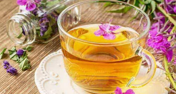 Вред и польза иван чая для организма женщины