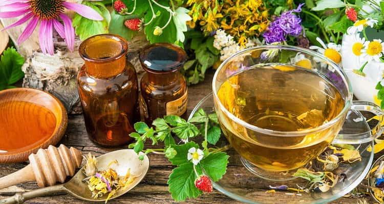 Польза иван чая для организма человека