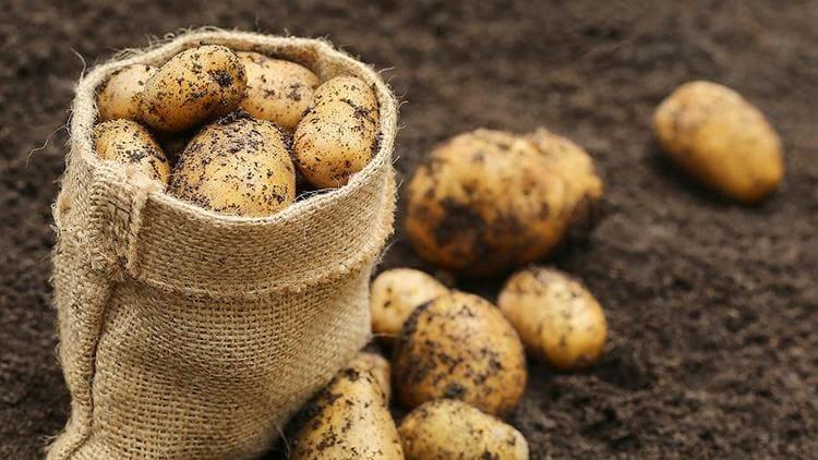 Узнайте о пользе и вреде сырого картофеля для организма.