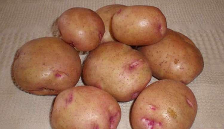 Важно выбирать для приготовления сока только самый лучший картофель, без повреждений и гнили.